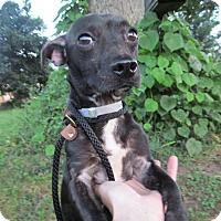 Adopt A Pet :: Albert - Lebanon, CT