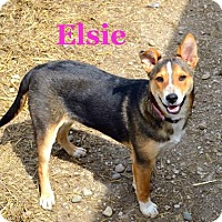 Adopt A Pet :: Elsie - Jasper, IN