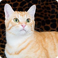 Adopt A Pet :: Chris - McEwen, TN