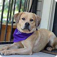 Adopt A Pet :: Bruce - Baton Rouge, LA