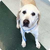 Adopt A Pet :: Spike - Broomfield, CO