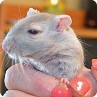 Adopt A Pet :: Elsa - Englewood, FL