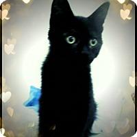 Adopt A Pet :: Mocha - Trevose, PA