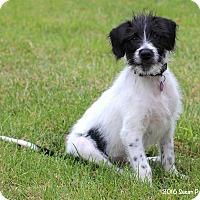 Adopt A Pet :: Rupert - Bedford, VA