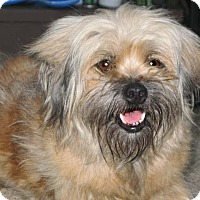 Adopt A Pet :: Peanut & ButterCup - Houston, TX