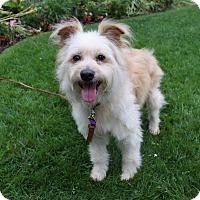 Adopt A Pet :: ZEKE - Newport Beach, CA