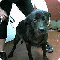 Adopt A Pet :: LOLLIE - Atlanta, GA