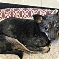Adopt A Pet :: Joey - Bernardston, MA
