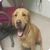 Adopt A Pet :: BUFORD - Bakersfield, CA