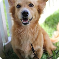 Adopt A Pet :: Fox - Waipahu, HI