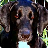 Adopt A Pet :: JASMINE(THE