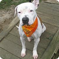 Adopt A Pet :: Kathrina - Voorhees, NJ