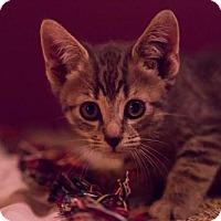 Adopt A Pet :: Dexter - Nesquehoning, PA