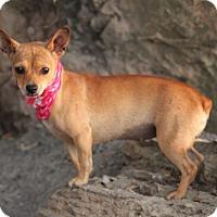 Adopt A Pet :: Jillian - Dalton, GA