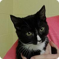 Adopt A Pet :: Herbie - Salem, WV