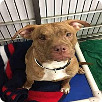 Adopt A Pet :: DEBO - Canfield, OH
