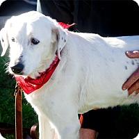 Adopt A Pet :: Annie family dog - Redding, CA