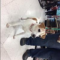 Adopt A Pet :: Raven - Stafford, VA