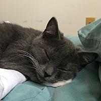 Adopt A Pet :: Omelet - Carlisle, PA