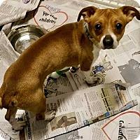 Adopt A Pet :: JJ - Halifax, NC