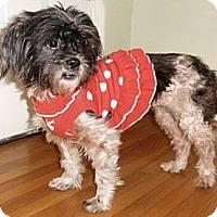 Adopt A Pet :: Maggie - Mooy, AL