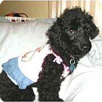 Adopt A Pet :: Francine - Mooy, AL