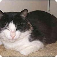 Adopt A Pet :: Hugo - San Ramon, CA