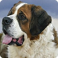 Adopt A Pet :: ROGER - Glendale, AZ