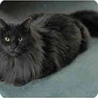 Adopt A Pet :: Sebastian - Portland, OR