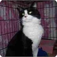 Adopt A Pet :: Socks - Hamburg, NY