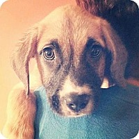 Adopt A Pet :: Hunter - Shavertown, PA
