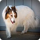 Adopt A Pet :: Kelsey