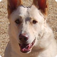 Adopt A Pet :: Jenna - Phoenix, AZ
