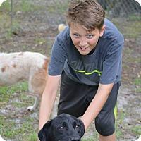 Adopt A Pet :: Shadow - Daleville, AL