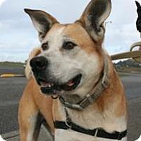 Adopt A Pet :: Niko - Gold Beach, Oregon - Hayward, CA