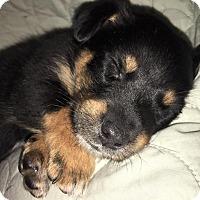Adopt A Pet :: Harley James - Ogden, UT