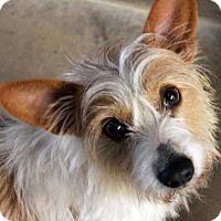 Adopt A Pet :: Sassy - Waco, TX