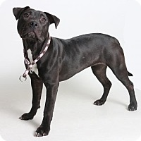 Adopt A Pet :: Milly - Roseville, CA