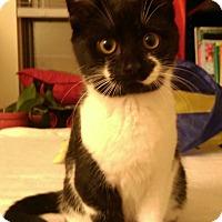 Adopt A Pet :: Maize - Mount Laurel, NJ