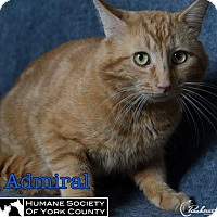 Adopt A Pet :: Admiral - Fort Mill, SC