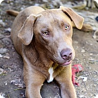 Adopt A Pet :: Choco - Kittery, ME