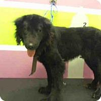 Adopt A Pet :: KIPP - Houston, TX