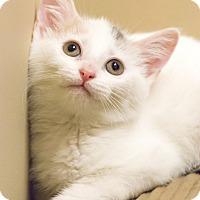 Adopt A Pet :: Mystique - Chicago, IL