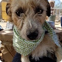 Adopt A Pet :: Dusty- ADOPTED 8/27/16 with June and Boyd! - Apple Valley, CA