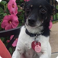 Adopt A Pet :: Bud - Coopersburg, PA