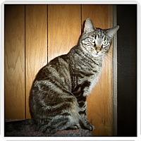 Adopt A Pet :: KITTEN - Medford, WI