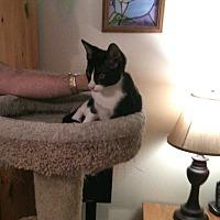 Adopt A Pet :: Dante - Fayetteville, TN