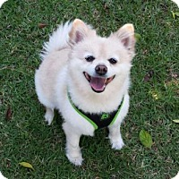 Adopt A Pet :: Tiffany - San Clemente, CA