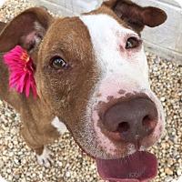 Adopt A Pet :: Elizabeth Taylor - Philadelphia, PA