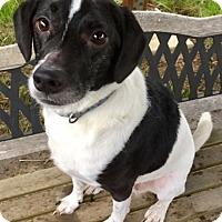 Adopt A Pet :: KODA - Newport, OR